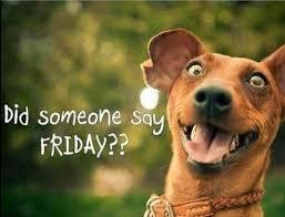 Friday around the profession
