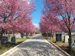 A dog-gone fun cemetery
